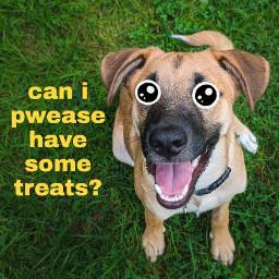 cartoon cartooneyeschallenge cartooneyes puppy pupyeyes picsart picsartpets picsartchallenge freetoedit eccartoonifiedanimals cartoonifiedanimals