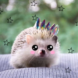 unsplash hedgehog crown princess adorbs animallover cute cartoon eyes pink stars wildlife challenge freetoedit saveremixchat eccartoonifiedanimals cartoonifiedanimals