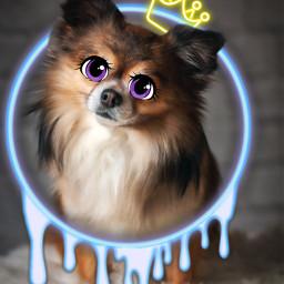 cartoondog circlebackground crownsticker cartooneyeschallenge eccartoonifiedanimals cartoonifiedanimals freetoedit