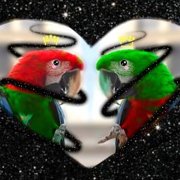 macaw cartooneyeschallenge eccartoonifiedanimals cartoonifiedanimals freetoedit
