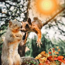 freetoedit irchangtime hangtime brown squirrel