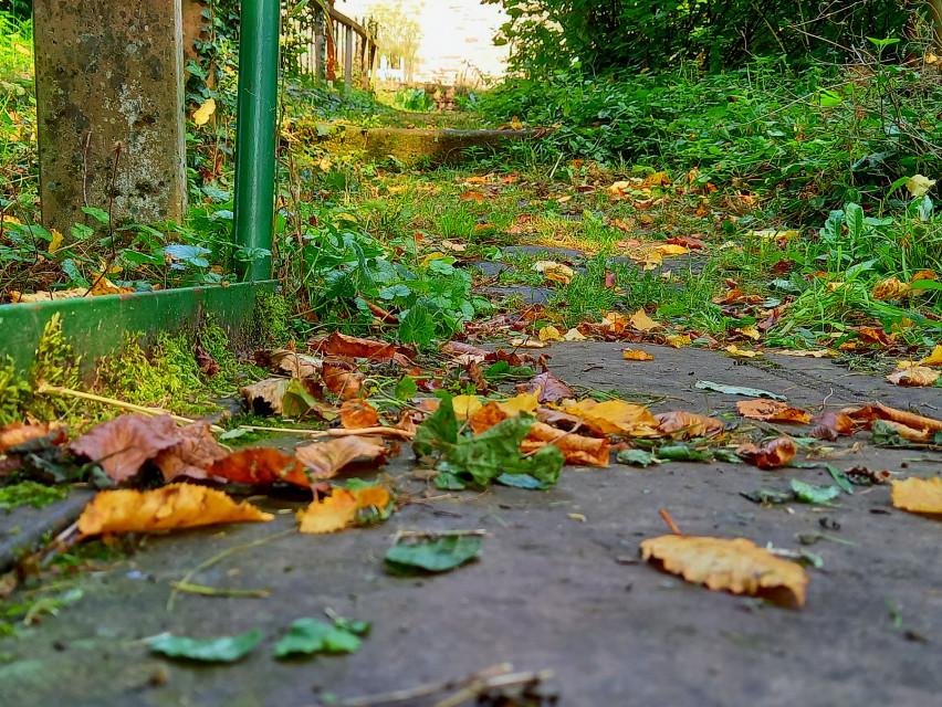 #september #autumn #myphotography #nature #naturephotography #trecking #colorphotography