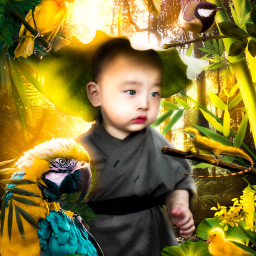 freetoedit boy forest jungle birds