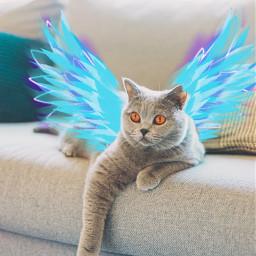 lazycat srcneonwings neonwings freetoedit