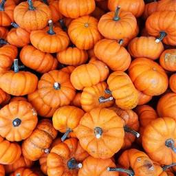pumpkins fallwallpaper orangeaesthetic orange autumnwallpaper fall autumn