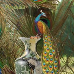 freetoedit peacock feathers myphotobackground artistic artdeco madebyme myart mystyle