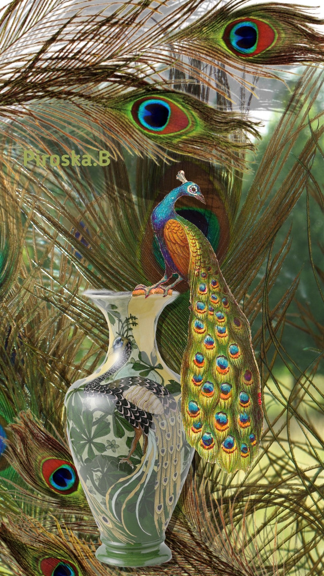 #peacock #feathers #myphotobackground #artistic #artdeco #madebyme @piroskab #myart #mystyle