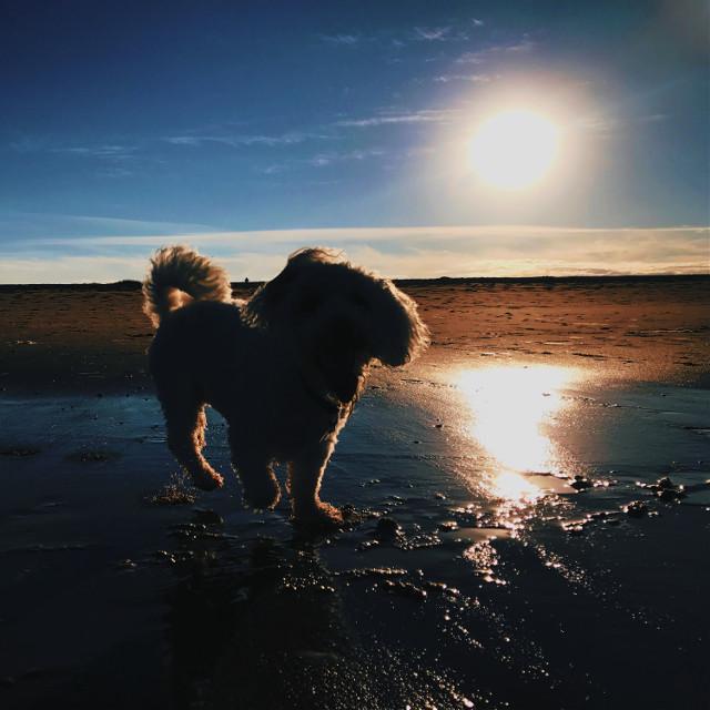 Enjoy My Doggo 🥰 Tags: #aesthetic #photography #replay #art #picsart #beach