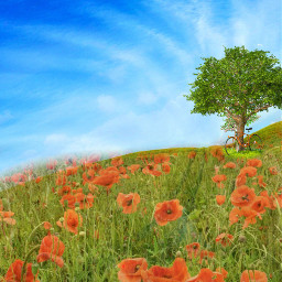 background summer summertime meadow freetoedit