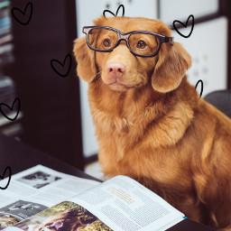 unsplash freetoedit nerd puppy cute adorbs heart background doodle animallover saveremixchat book srcdoodlehearts doodlehearts