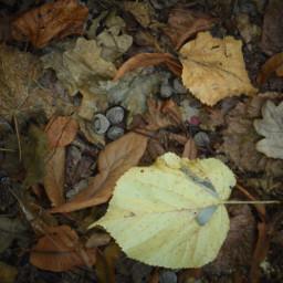 freetoedit pcleavesisee leavesisee