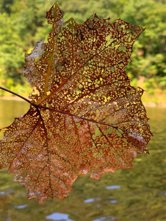 #leaves #leaf #fall