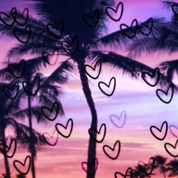 heartsticker palmtrees sunset srcdoodlehearts doodlehearts freetoedit