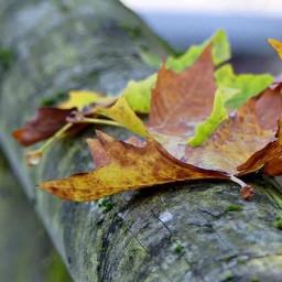freetoedit autumn pcleavesisee leavesisee