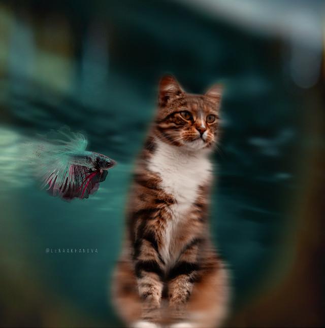 #freetoedit#cat #fish  —— https://youtu.be/Zi_hSHBVPpA -----