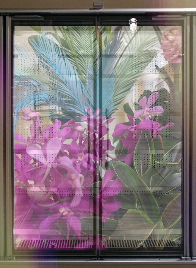 #tropicalflowers