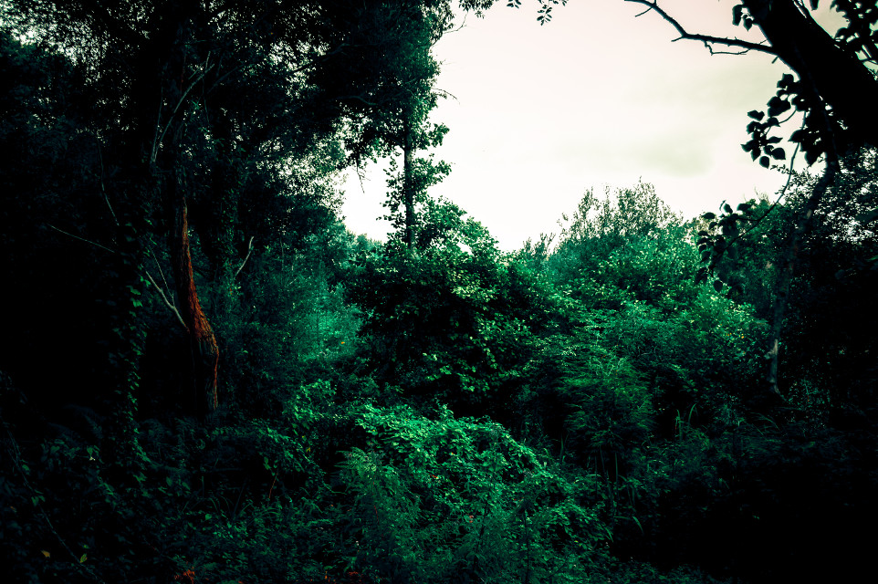 🇯 🇺 🇳 🇬 🇱 🇪  . 🌴 . 🌱 . #photography #wildlife #wild #nature #naturephotography #naturelovers #green #greenaesthetic #leaves #vegetation #flora #galicia #sky