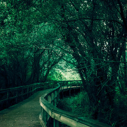 path pathway road photography wildlife wild nature naturephotography naturelovers green greenaesthetic leaves vegetation flora galicia sky hiking route track travel traveltheworld traveling travelphotography journey summer freetoedit