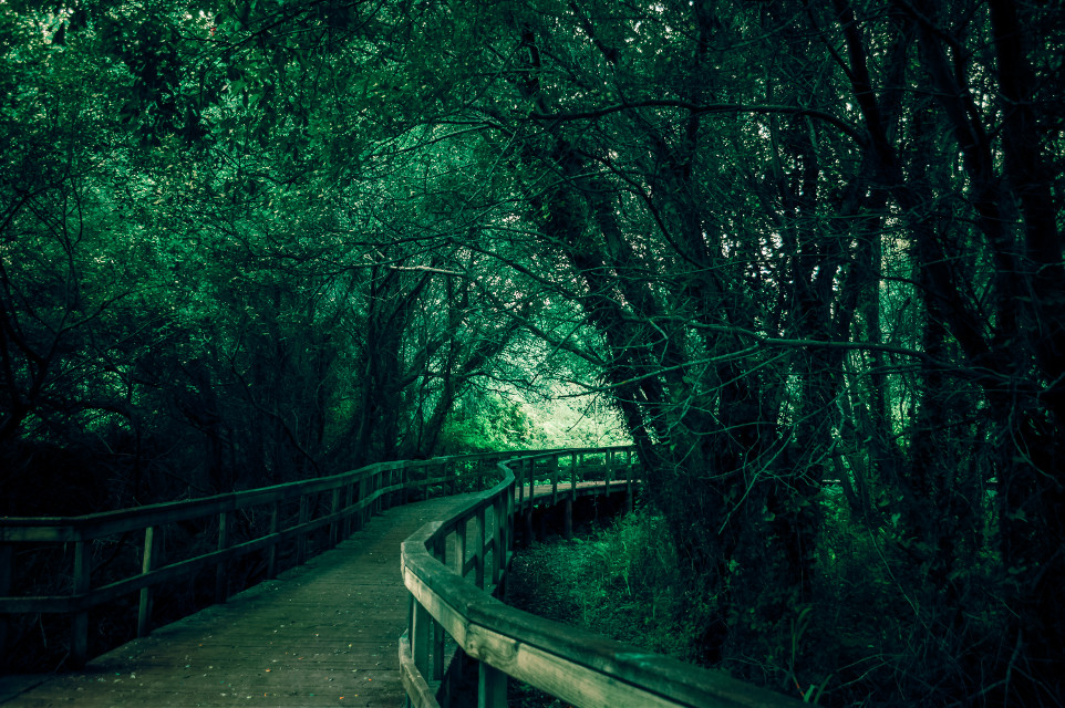 #path #pathway #road #photography #wildlife #wild #nature #naturephotography #naturelovers #green #greenaesthetic #leaves #vegetation #flora #galicia #sky #hiking #route #track #travel #traveltheworld #traveling #travelphotography #journey #summer