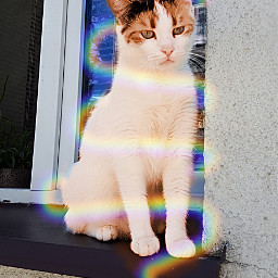 catart freetoedit