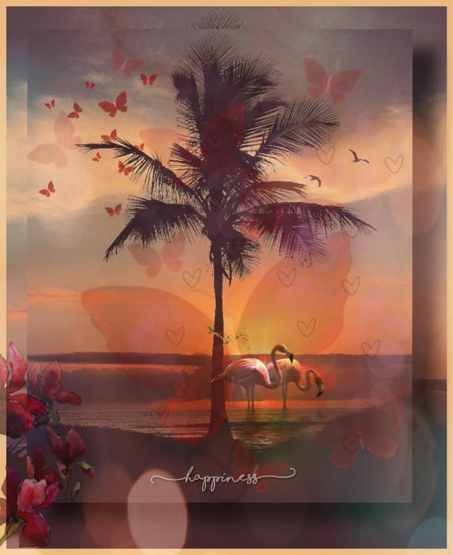 #kinora #happiness #hearts #flamingos #madewithpicsart #picsart #lovepicsart #shadowframe #palmtree #sunny #warmcolor #bokeh #butterfly #red #orange #birds #flyinghigh #loveit #myremix