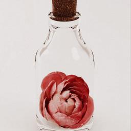 freetoedit flower red minimalism