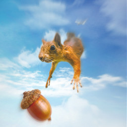 freetoedit squirrel sky clouds nuts irchangtime