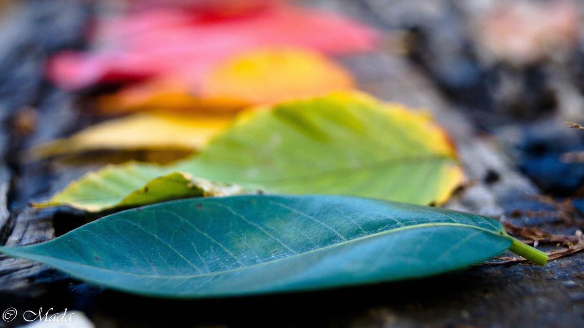 #nature #beautiful #followme #rainbow #colorful