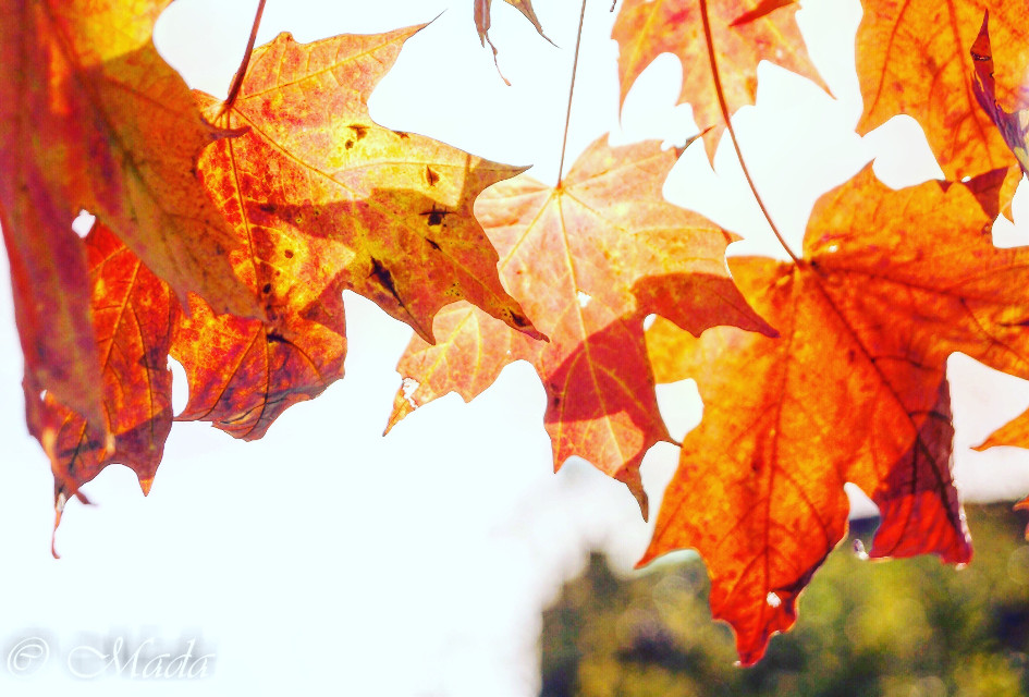 #interesting #fall #leaves #nature #followme #photography #orange #colorful