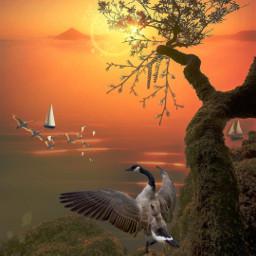 tree sunset sunrise landscape nature birds freetoedit