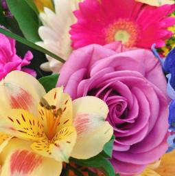 freetoedit flowers bouquet rose