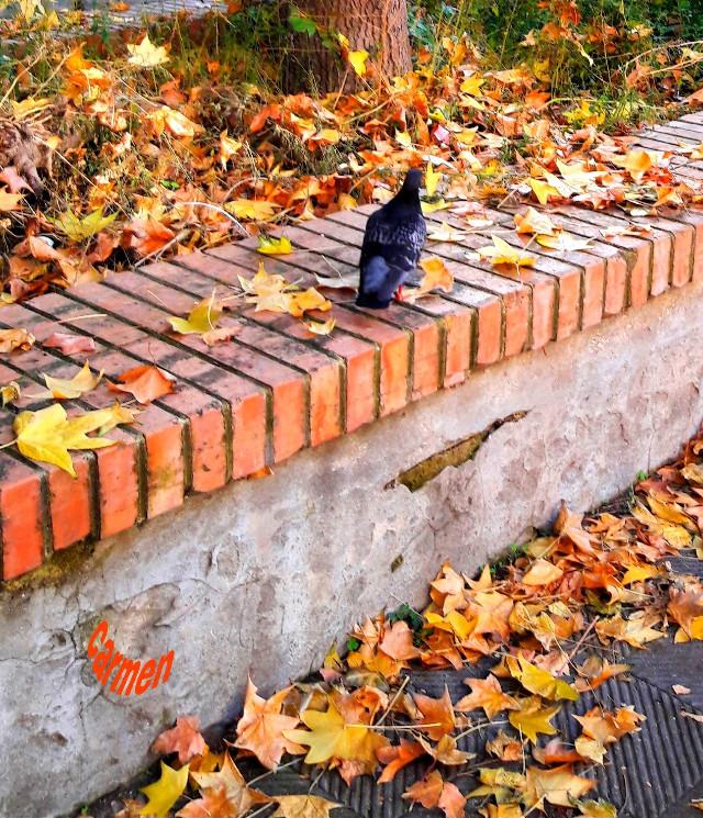 #myphoyo #tutte le foglie che vedo #pcleavesisee #leavesisee https://picsart.com/i/338131024025201 https://picsart.com/i/338131024025201?challenge_id=5f5f3d13828f4a4917ac30d3