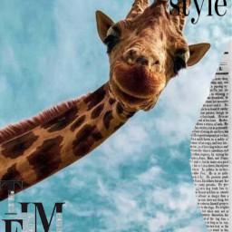 vouge freetoedit giraffe aesthetic art uniqe animals 2020art interesting