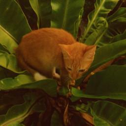 mobilephotography cat photography zamboanga philippines zenfone5 animal petsandanimals petphotography