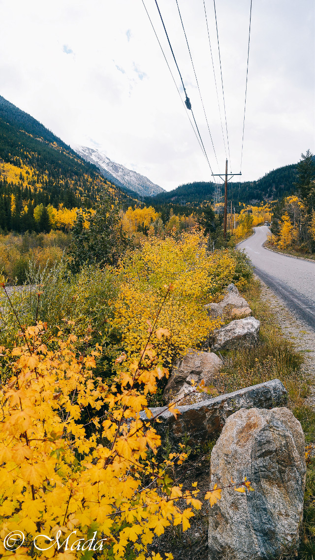 Take me home, country road #beautiful #colorado #mountains #yellow #nature #interesting #photography