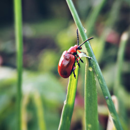 beetle red grass nature green freetoedit