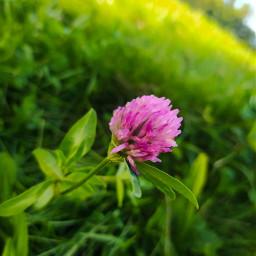 photography flowerphotography besutyful lovelife beautifulworld