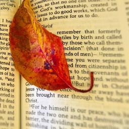 leaf bible leavesisee