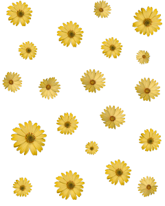 freetoedit flower flowers flor flores daisy margarita amarillo yellow yellowflower floramarilla yellowsticker flowersticker yellowedaisy aesthetic yellowaesthetic simple nature stickeramarillo background yellowebackground flowerbackground fondoamarillo daisybackground bg