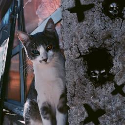 catlover demon dark paranormal loki house cat fantasy dream freetoedit