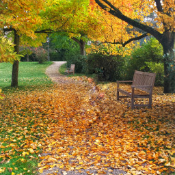 fall autumn autumnleaves bench photography pcleavesisee