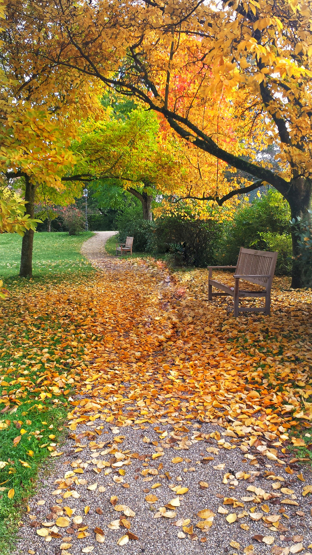 Repost for #fall #autumn #autumnleaves #bench #photography  #pcleavesisee #leavesisee