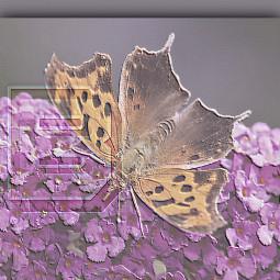 flowers butterfly ecartisticalphabet artisticalphabet