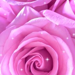 pinkroses flowershoutout brushtool background pink naturephotography freetoedit