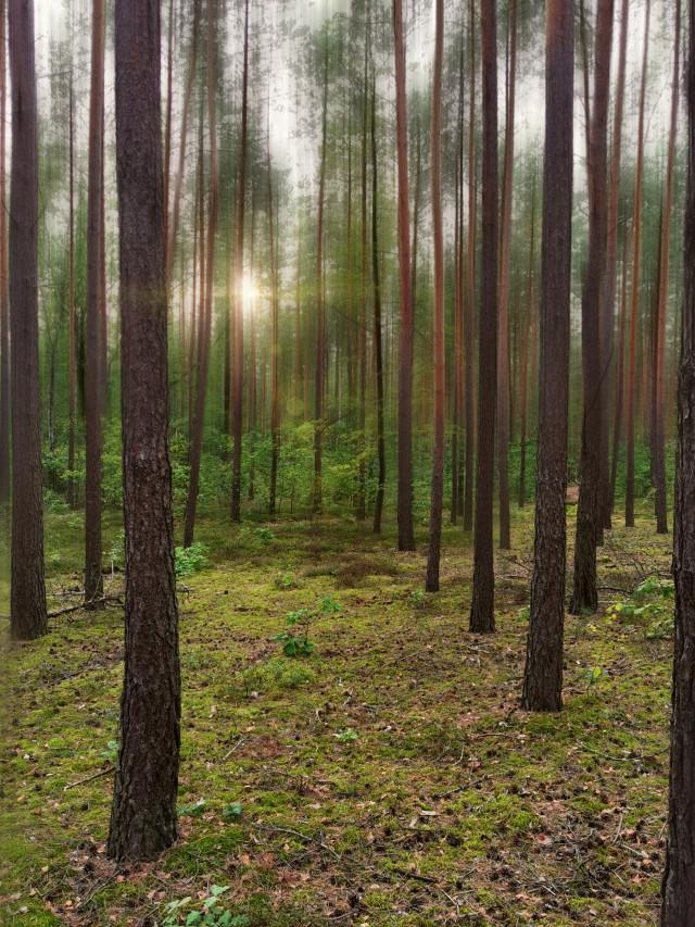 #forest #trees #sunlight #sunnyday #beautifulday #beautifulnature #myphoto #blureffect #myedit #myart #madewithpicsart @picsart #JoannArt #becreative #HeyPicsArt #picsartmaster