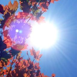 freetoedit pcleavesisee leavesisee sun automne