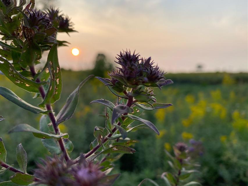 #lovely #littleflower #myphoto #cellphonecamera #hiking #interesting #music #afternoon #familytime