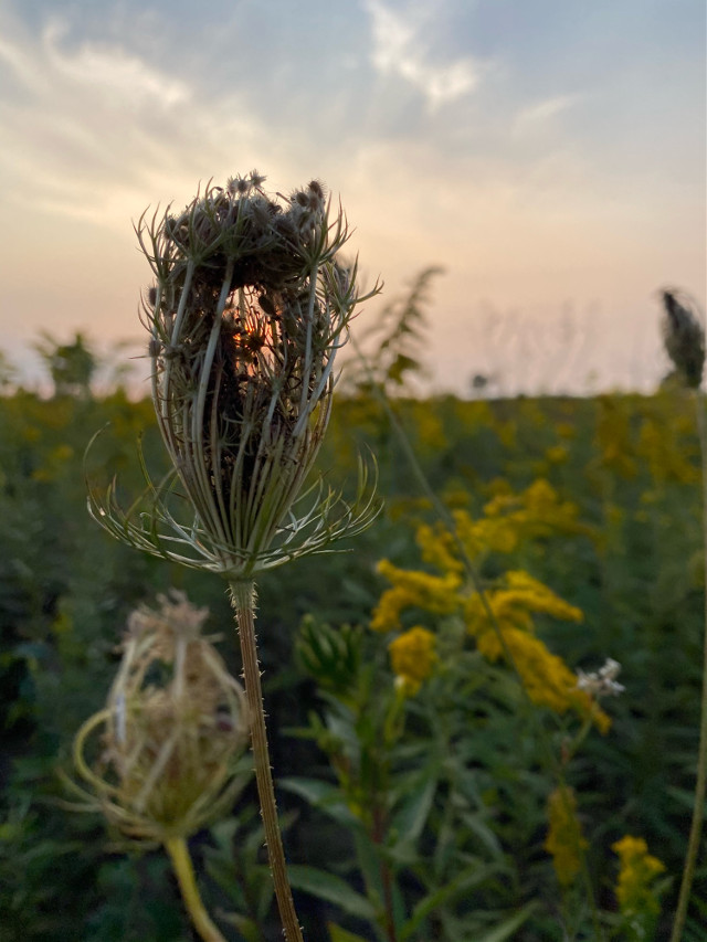 How beautiful! #mycaptures #myphotography #cellphonecamera #nature #plants #sky #sunset #hiking #summerday
