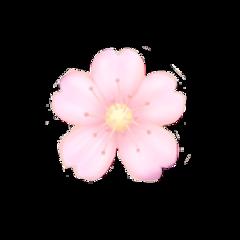 sakura cherryblossoms blossom emoji pinkaesthetic