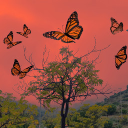 freetoedit clouds fog orange butterflies hills trees nature landscape heypicsart colors colorful stayinspired dream vibes